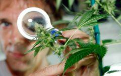 5-principios-a-tener-en-cuenta-de-la-marihuana