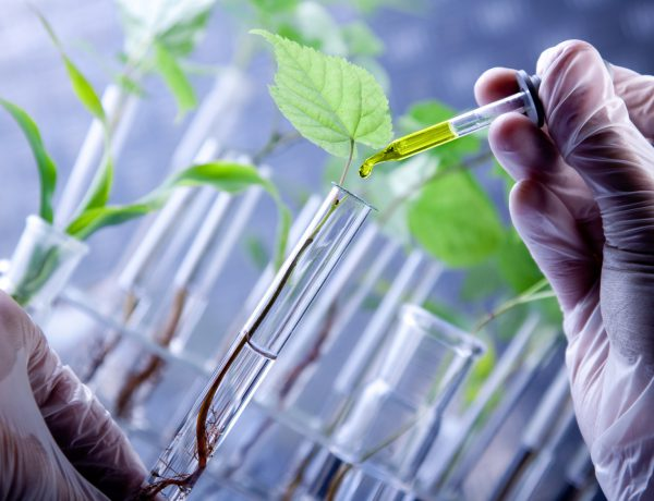 Scientist examine plants